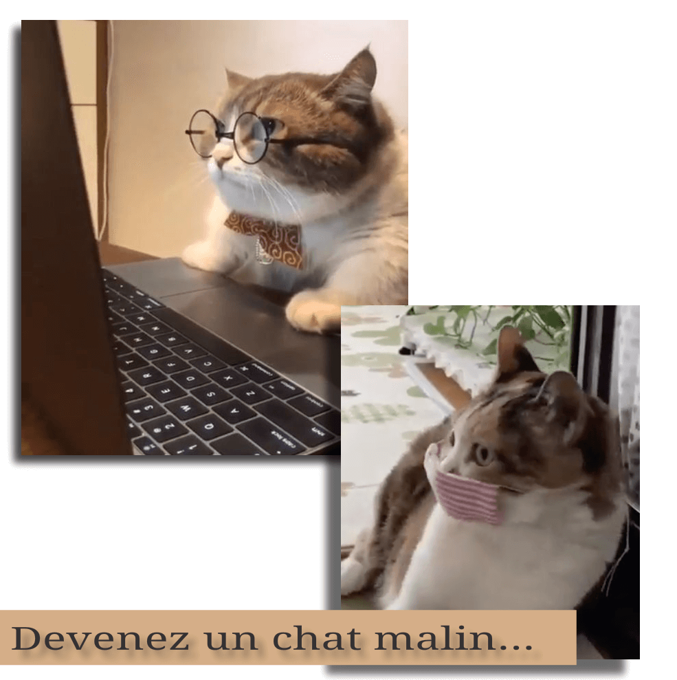 Chat malin collection zanzybar